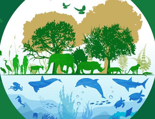 Mercociudades en el Día Mundial de la Vida Silvestre
