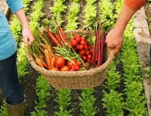 Convite FAO: COVID-19, governos locais e segurança alimentar